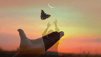 """Butterfly takes off from the palm of a hand. Descriptive picture of Tailor Hill Stations song """"Fly""""."""